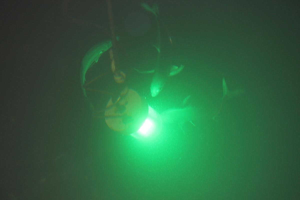 30w underwater fishing led light 12 24v for Led fishing light